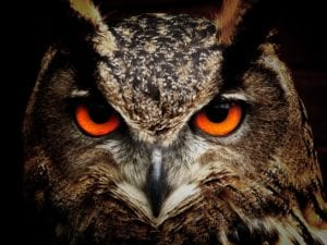 owl face with red eyes