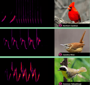 spectrogram of bird songs with picture of each of 3 birds